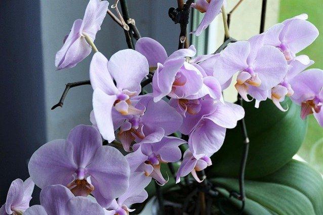 Welke kamerplanten bloemen