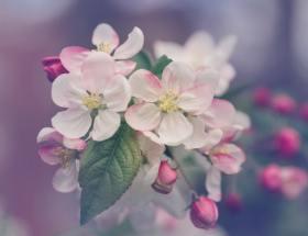 Online rouwbloemen bestellen