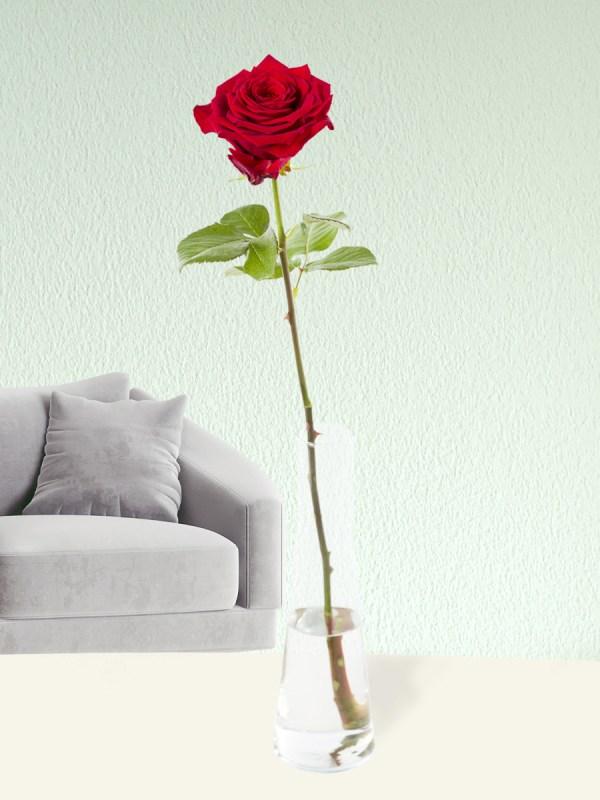 Rote Rose inklusive Glasvase | Rosenstrauß online bestellen | Rosenversand Surprose.de