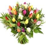 Mix tulpen bestellen en bezorgen bestellen of bezorgen