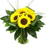 Zonnebloemen compact bestellen of bezorgen