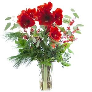 Rode amaryllis met ilex bestellen of bezorgen online