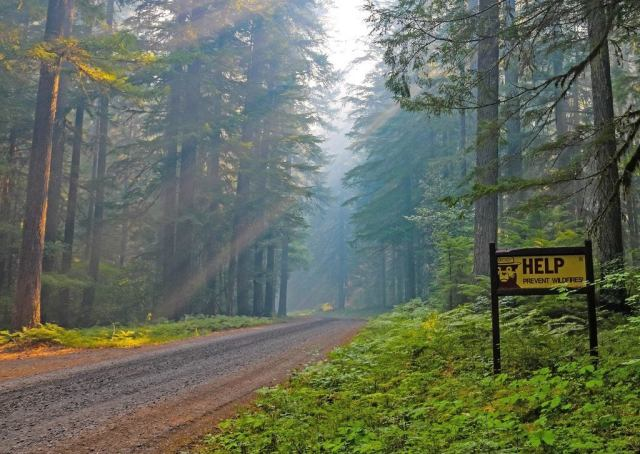 Forest road with a prevent wildfires sign.
