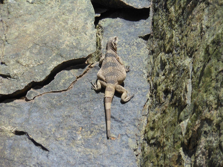 camping in death valley with reptiles