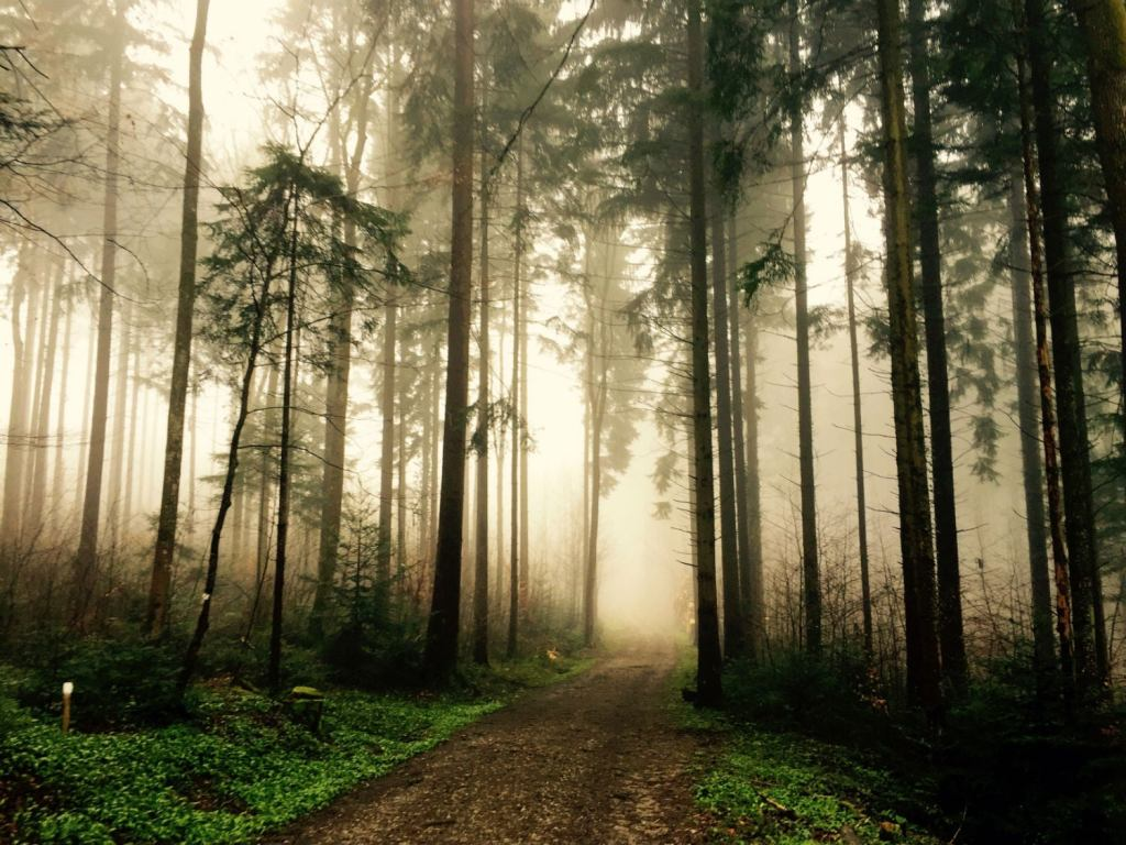 Go beyond forest bathing with our other camping tips.