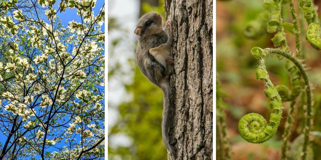 animals spotted while backpacking in shenandoah national park