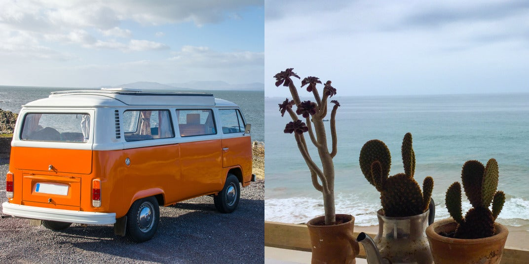The Vanlifer's Guide To Plant Care and Gardening On The Road