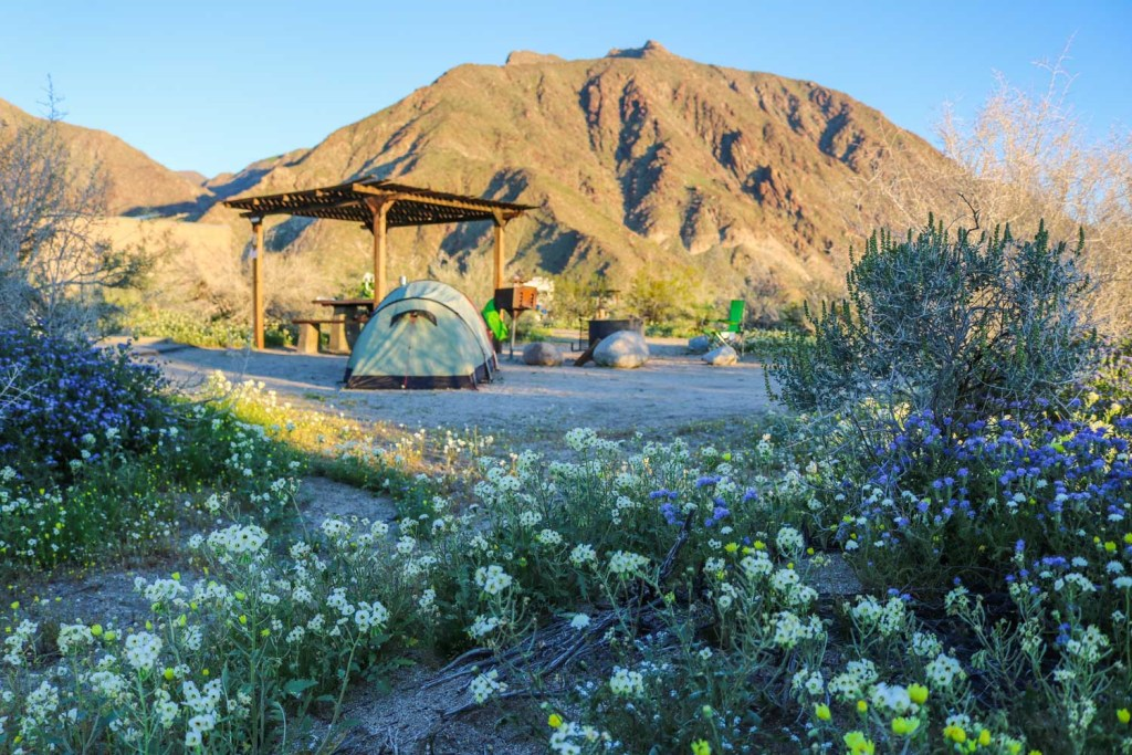 mountainous tent campsite in the background with wildflowers in the foreground