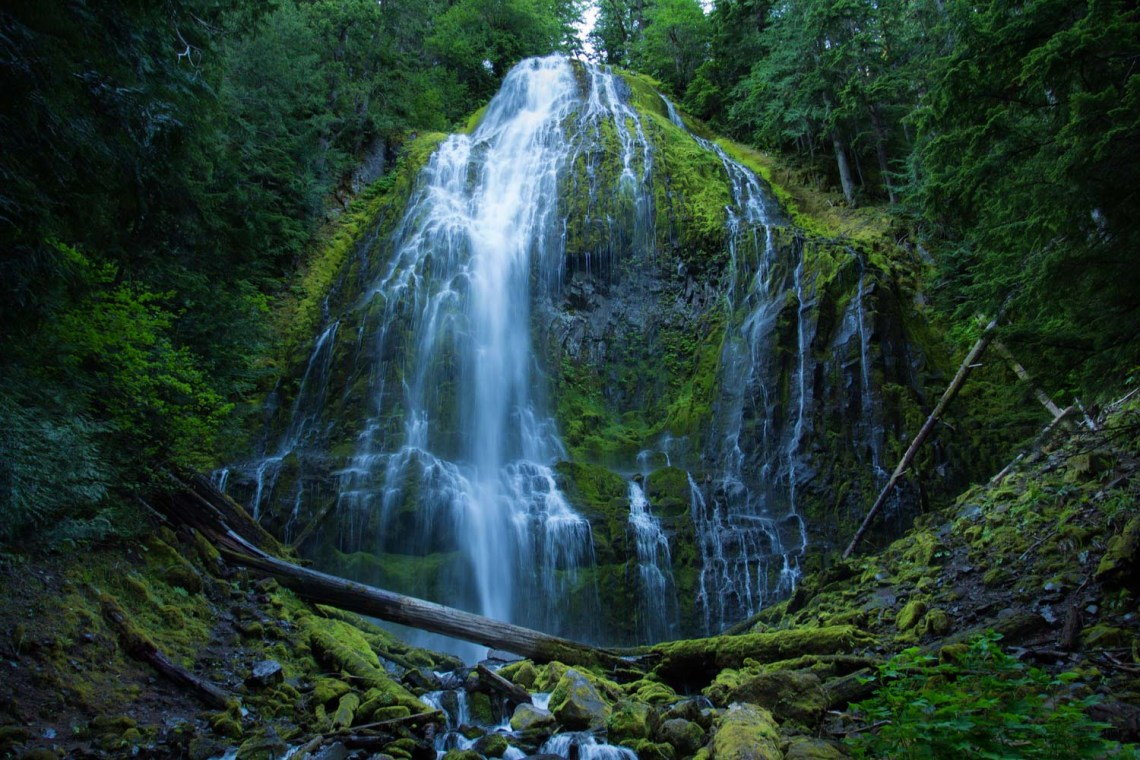 a stream of water cascades down a mossy rock face in a green forest