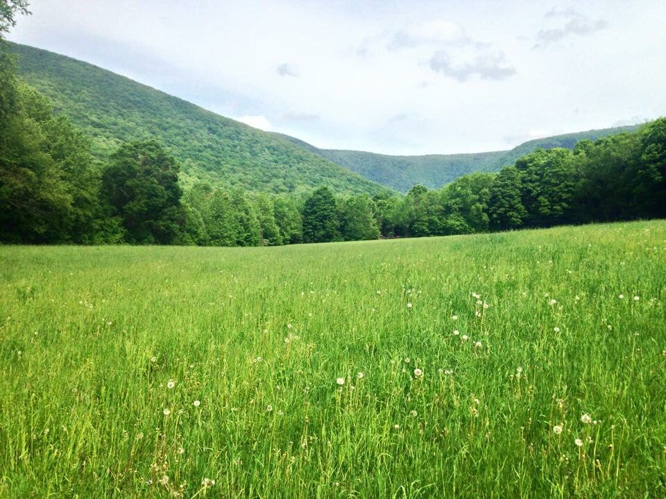 Green rolling hills and a meadow in Massachusetts