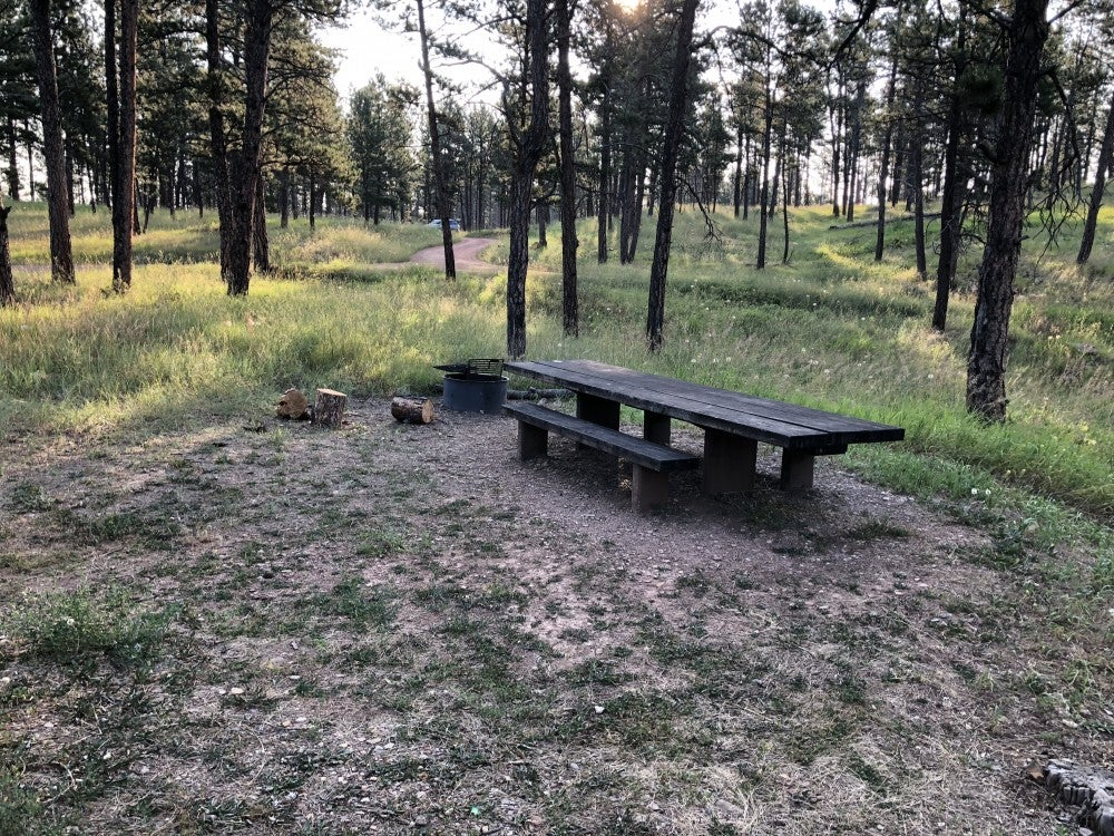 empty picnic table beside fire ring in remote wooded campsite