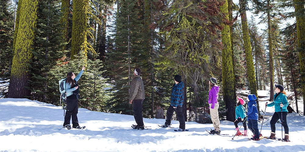 instructor pointing upwards as 6 person snowshoe tour looks at tall trees