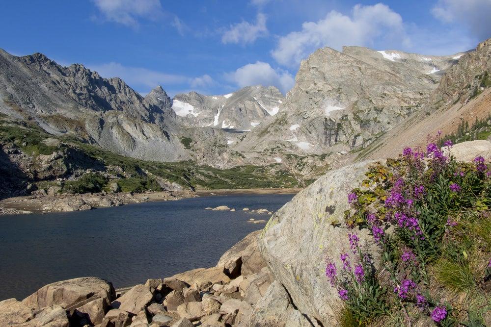 purple wildflowers grow on rocky mountainside near alpine lake