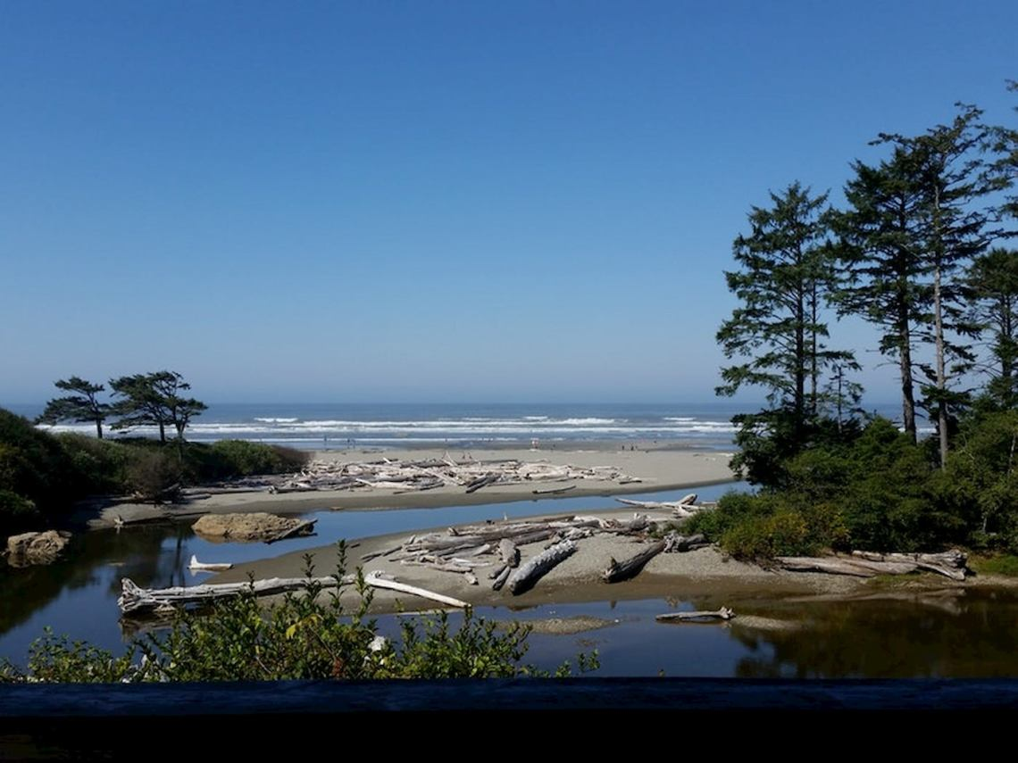 Washington coast covered in evergreens and washed up driftwood.