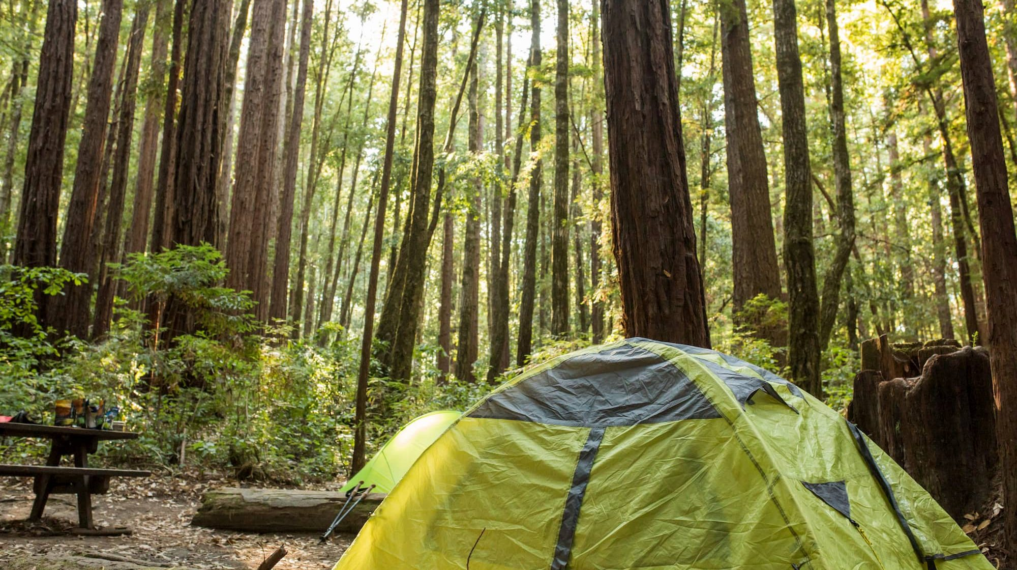The Best Santa Cruz Camping, from the Beach to the Forests