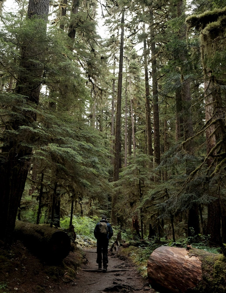 Backpacker on trail in Olympic National Park Rainforest