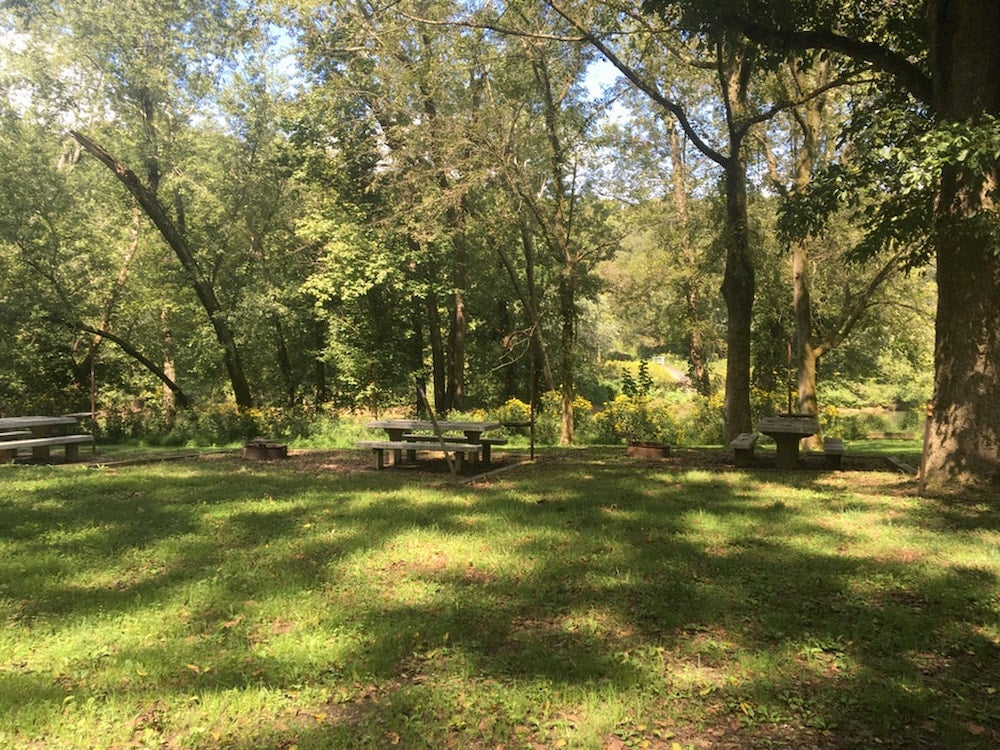 Dappled sunshine on grass campsite with picnic table and surrounding forest.