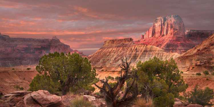 Panoramic photo of red canyons and juniper trees