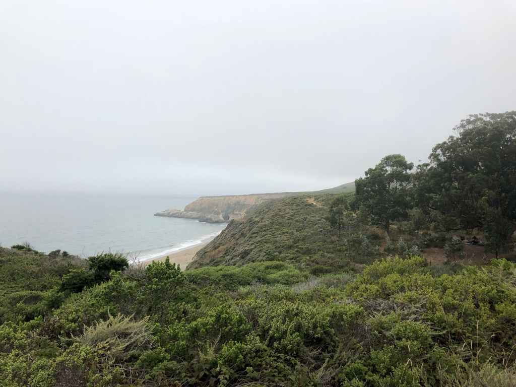 foggy view overlooking ocean from forested hillside above shoreline