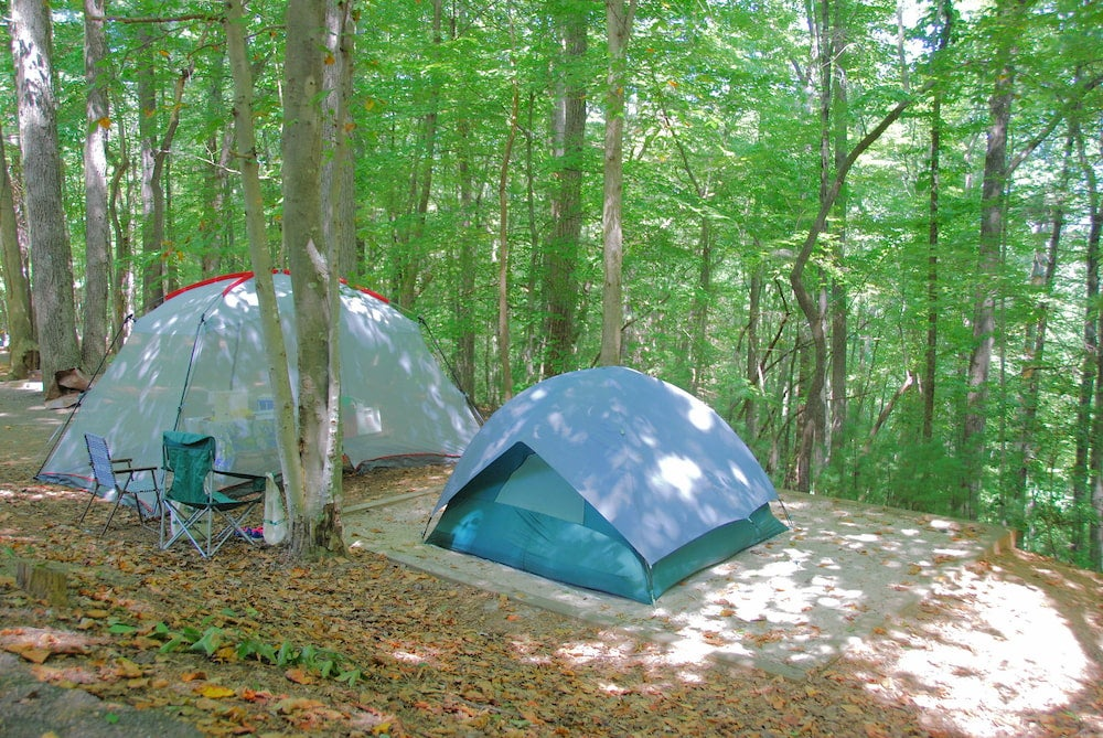 two tents on a tent site in the forest