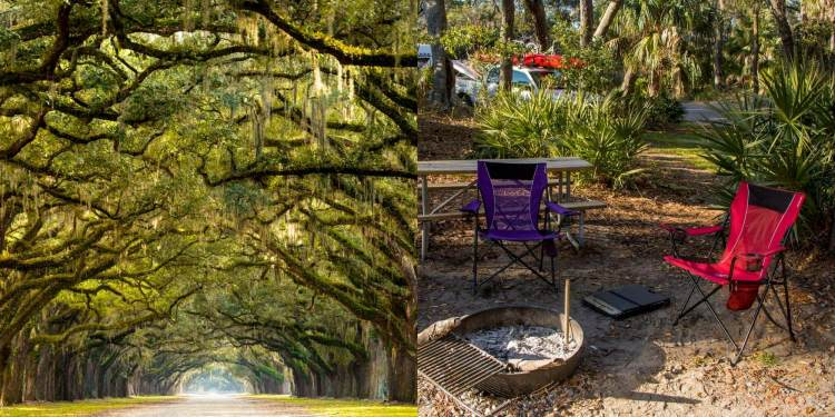 (left) looking down dirt lane through green living oaks of the south (right) 2 camp chairs around a fire pit in a campground near savannah ga