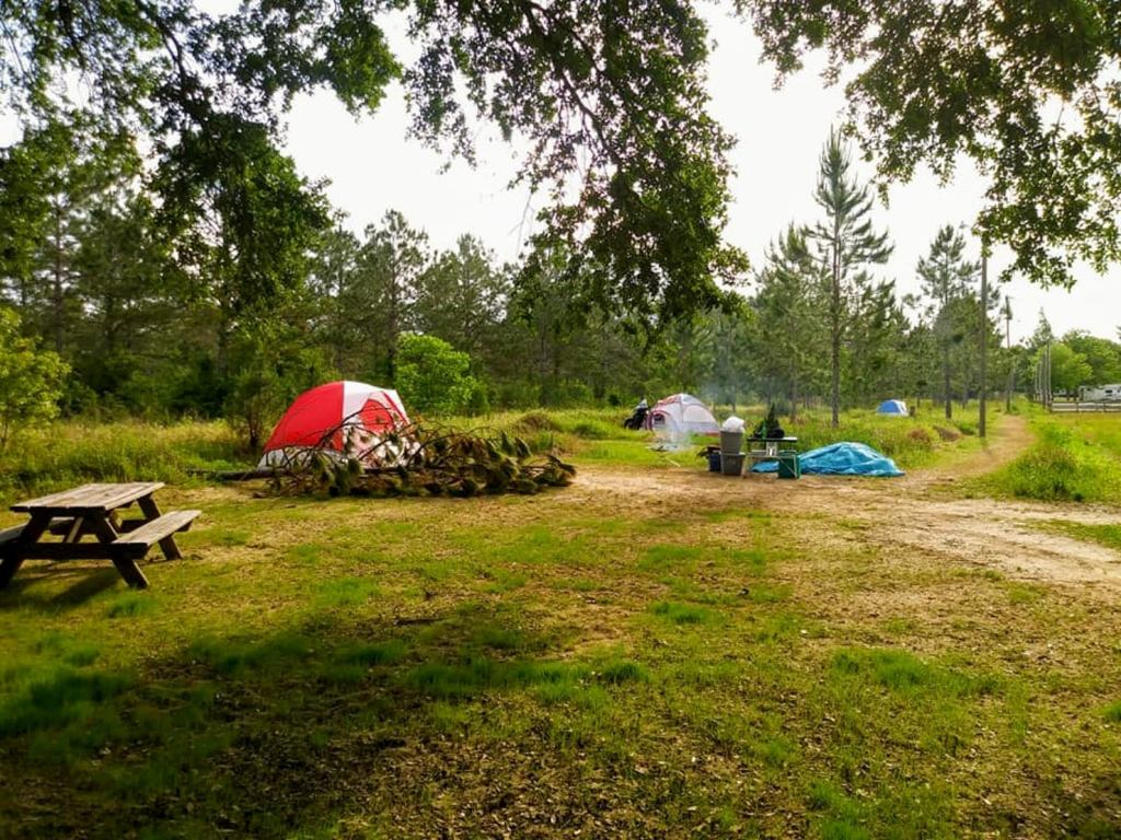 Tents pitched in a field beside a brushy forest.