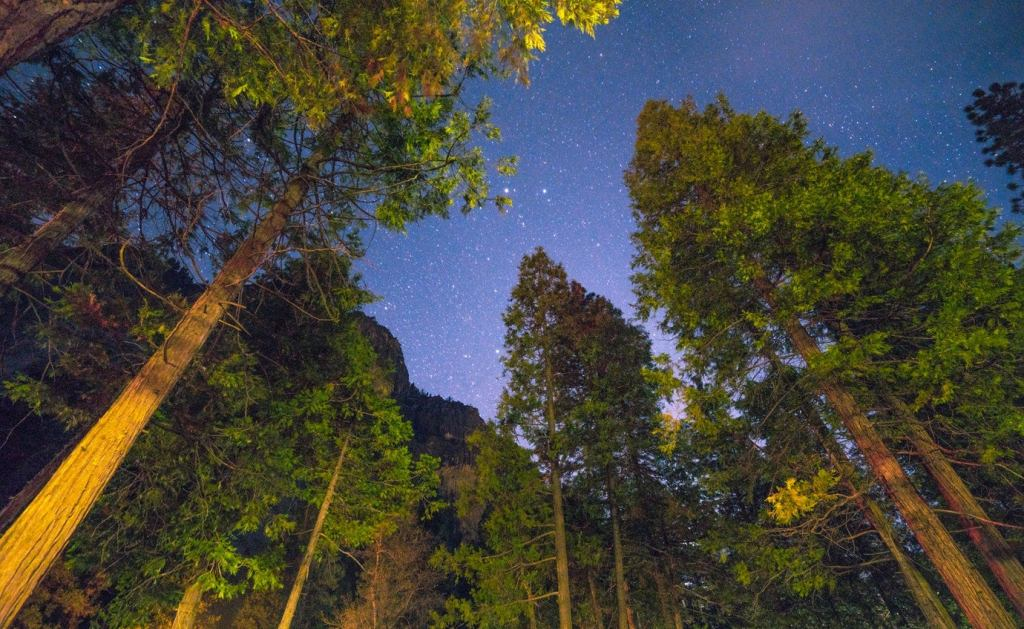 view from picnic table at campsite showing a starry sky above tall pine trees