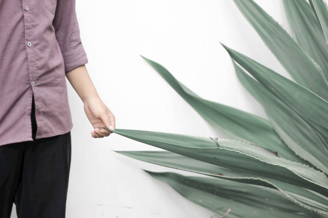 Person touching large aloe plant.