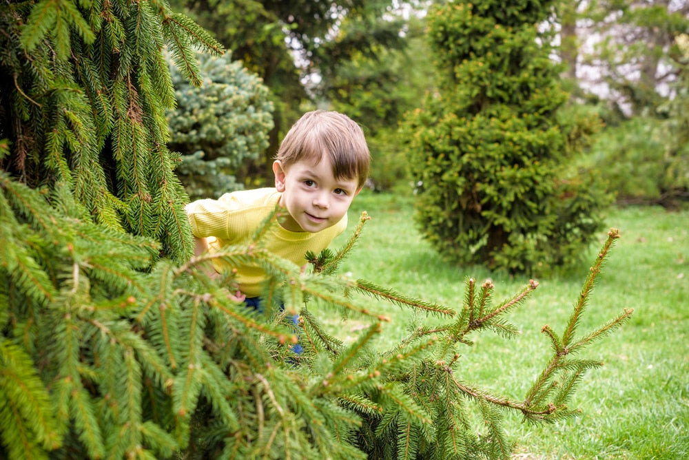 Kid hiding in pine trees.