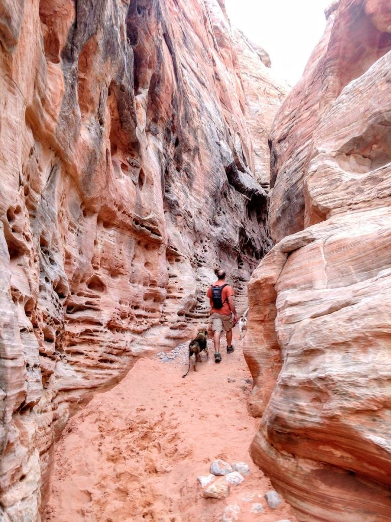a man with two dogs walks through a slot canyon in nevada