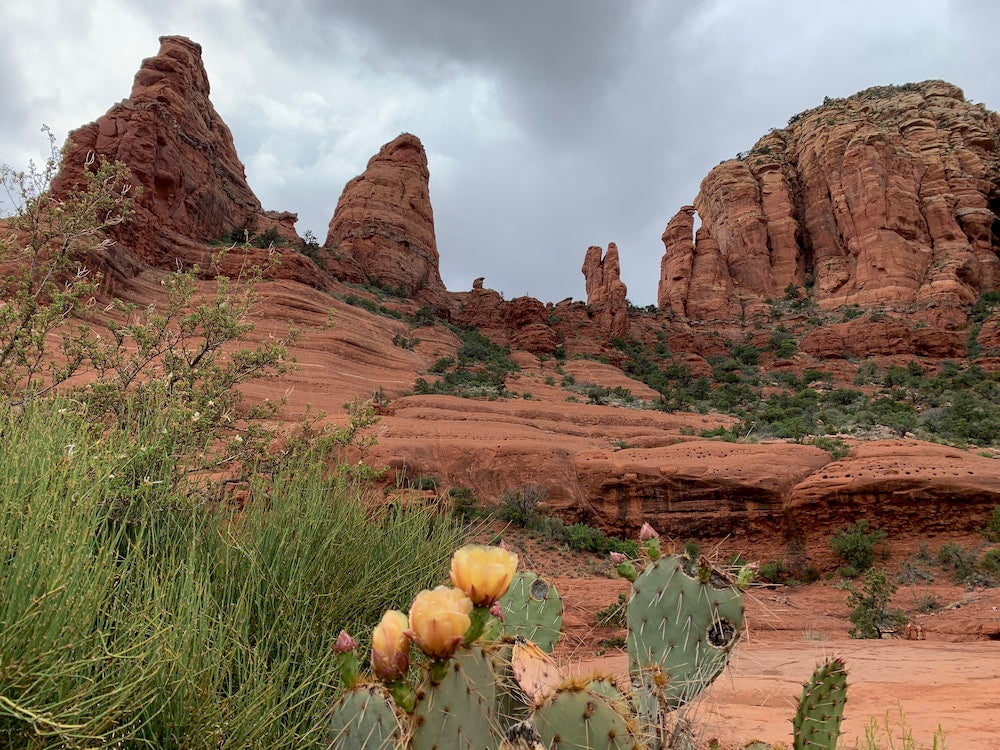 Red rock formations with cactus and flowers in foreground