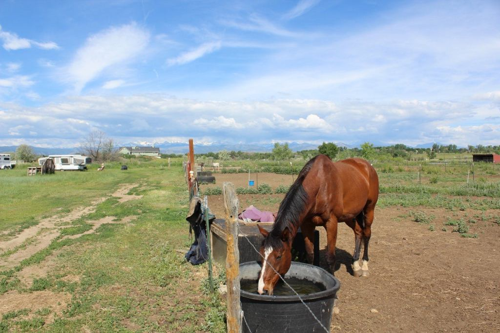 a horse feeds at a trough with an RV behind it