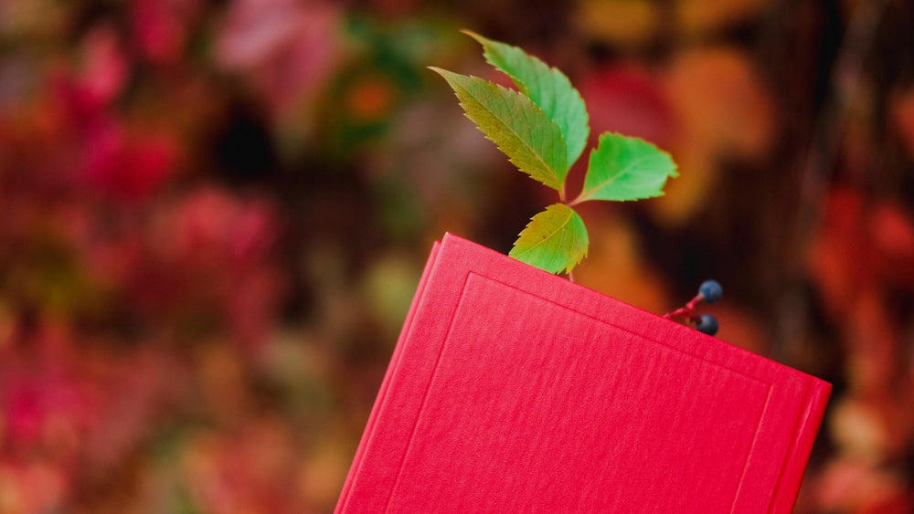 a leaf used as a bookmark in a red book