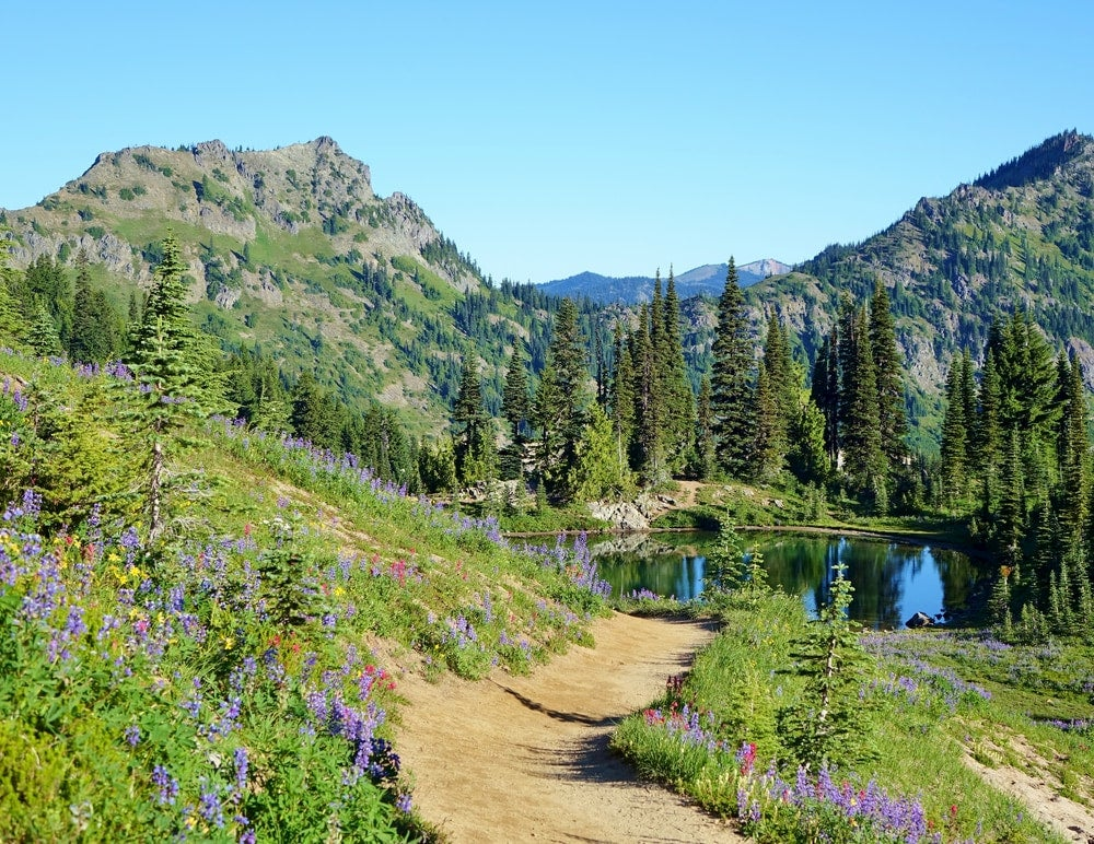Mountains with path leading to lake lined with wild flowers in Wenatchee National Forest