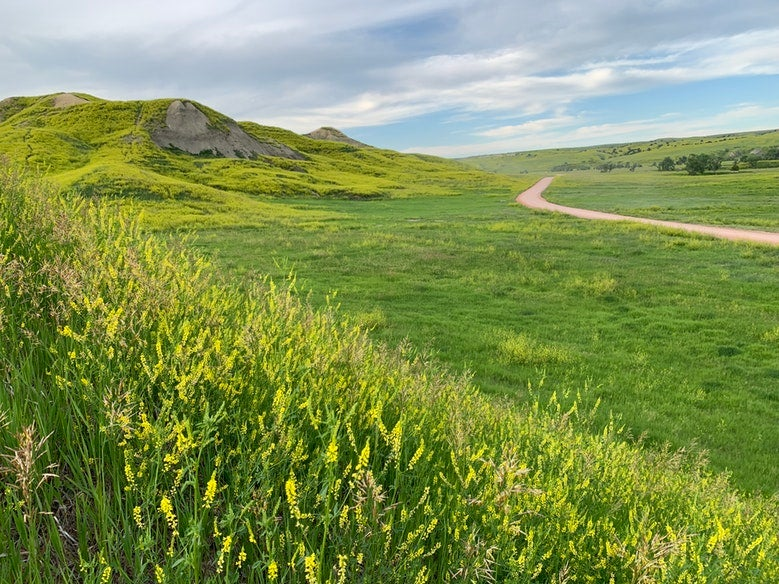 path winds through large green field near Sage Creek Campground in South Dakota, photo from a camper on The Dyrt