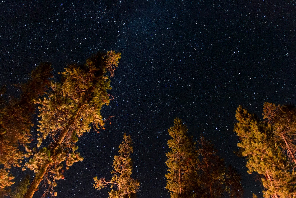 Trees and stars