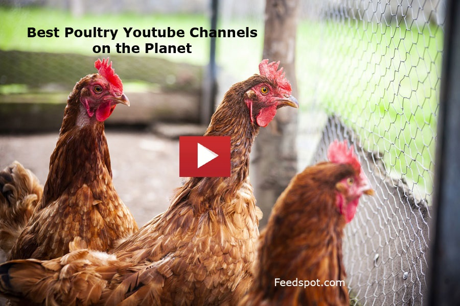 Poultry Youtube Channels