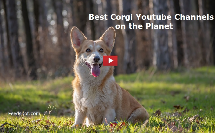 Corgi Youtube Channels