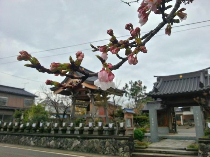 Clouds, Sakura, and Temples
