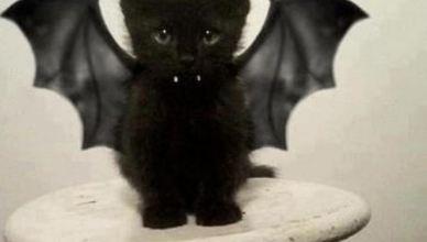 Photo de chaton pour les 25 ans du web