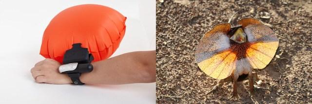 Comparaison kingii objet kingii animal