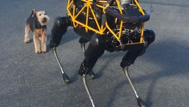 Spot, le robot chien de Boston Dynamics et Fido, un vrai chien