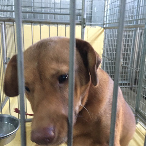 宮崎県収容犬17-11-22-002