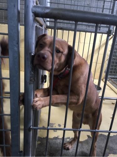 宮崎県収容犬17-11-22-004