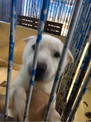 宮崎県収容犬17-11-22-006