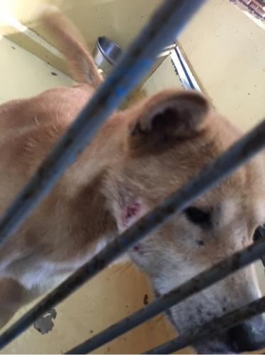 宮崎県収容犬17-11-22-012