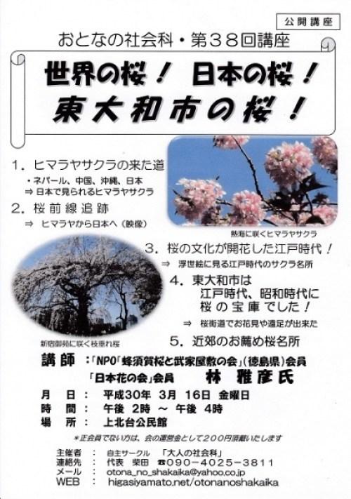 東大和の桜