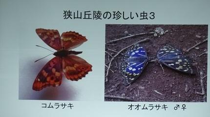 8-2狭山丘陵の珍しい虫2