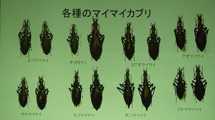 18各種のマイマイカブリ