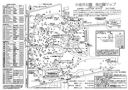 世界の桜!日本の桜!東大和市の桜!4